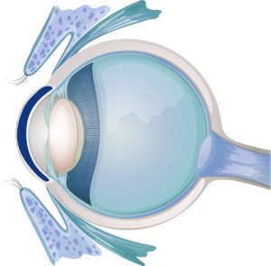 Eyesite